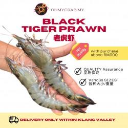 Black Tiger Prawn 41/50