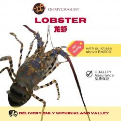 Premium Frozen Lobster 1-1.1kg