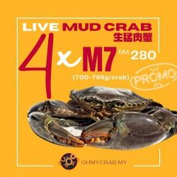 Live Mud Crab Promo M7 (700-790g) x 4 crab
