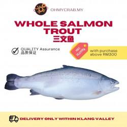 Whole Fresh Salmon Trout  (Sashimi Grade) 4.4kg - 4.6kg