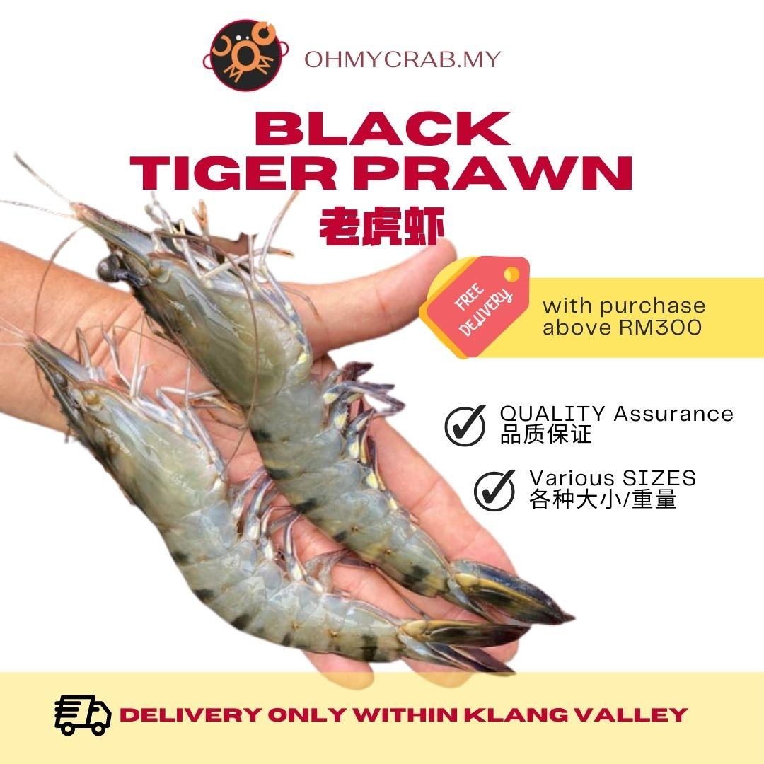Black Tiger Prawn 21/25