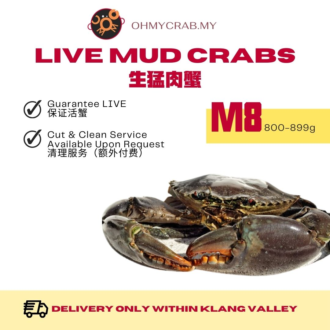 Live Mud Crab M8 (800-890g)