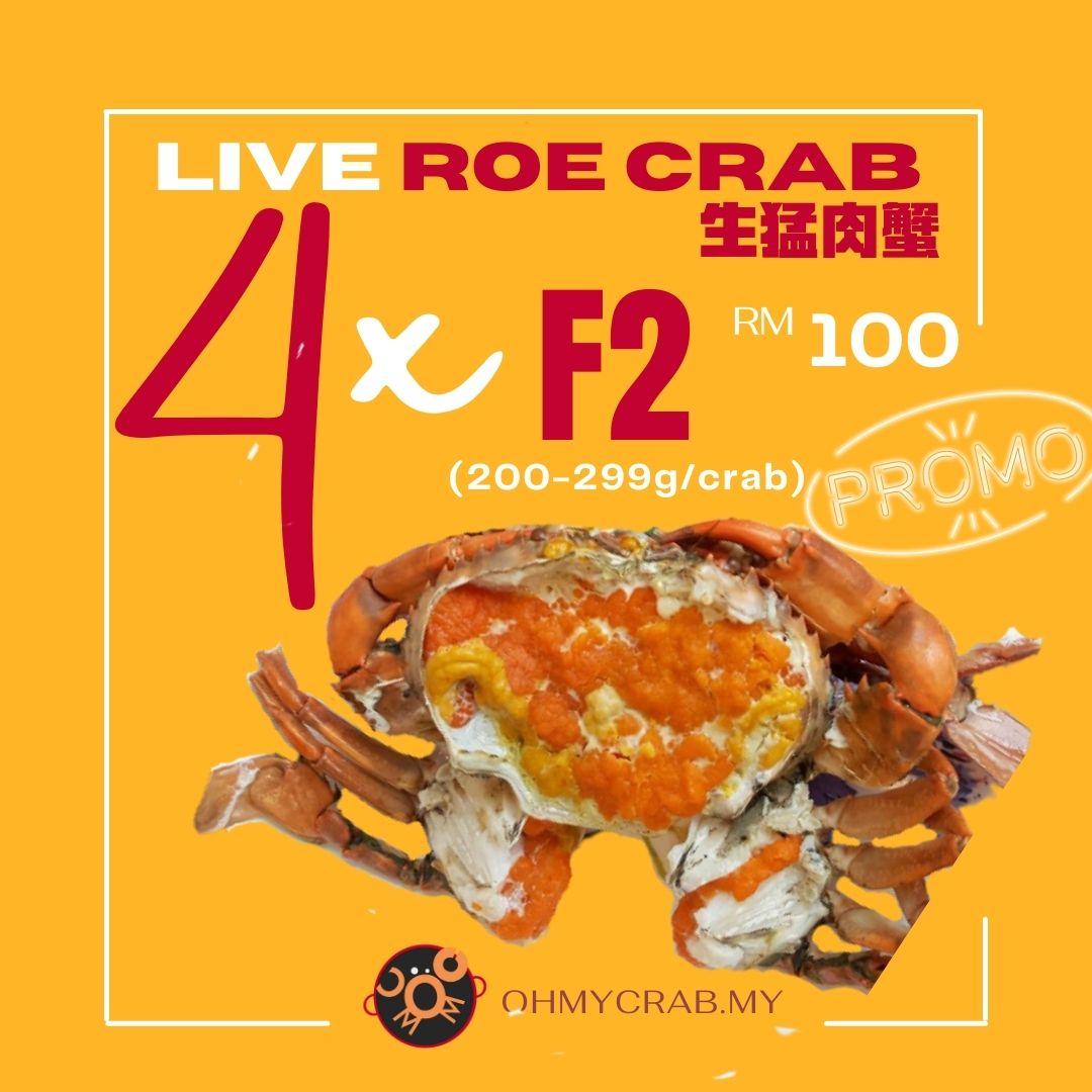 Live Roe Crab Promo F2 (200-299g) x 4 Crab
